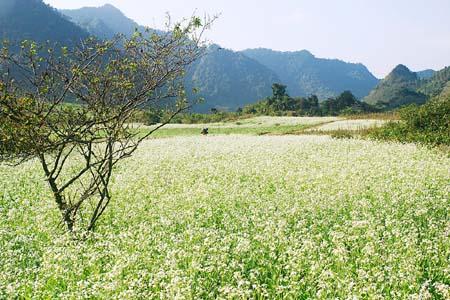 breathtaking fields in Northern Vietnam