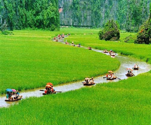 paddy field in Ninh Binh
