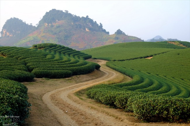 6 breathtaking fields in Northern Vietnam