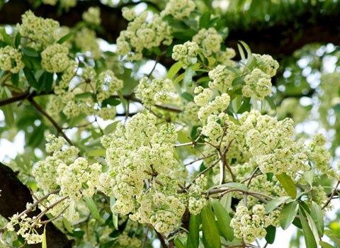 Seasons of flower in Vietnam