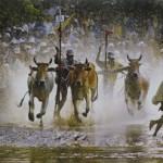 Sene Dolta Festival, Khmer people in Southern provinces celebrate Sene Dolta Festival
