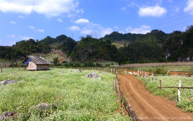 Visiting Moc Chau in November